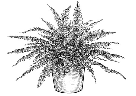 Fern in pot illustration, engraving, ink, line art, vector