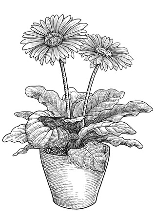 Gerbers flower illustration drawing engraving ink line art vector