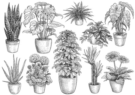 Houseplant collection illustration drawing engraving ink line art vector Иллюстрация