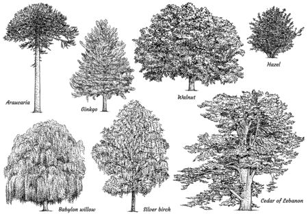 Tree collection illustration, drawing, engraving, ink, line art, vector Illustration