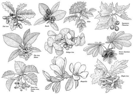 Illustrazione della raccolta del ramo di un albero, disegno, incisione, inchiostro, linea arte, vettore