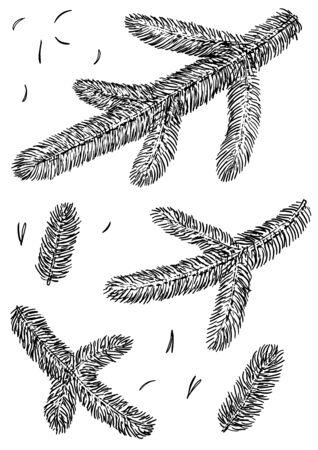 Kiefernzweig Illustration, Zeichnung, Gravur, Tinte, Strichzeichnungen, Vektor