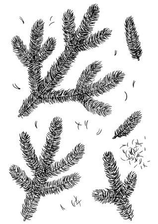 Illustrazione del ramo di pino, disegno, incisione, inchiostro, line art, vector Vettoriali