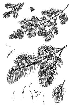 Pine branch illustration, drawing, engraving, ink, line art, vector Ilustração