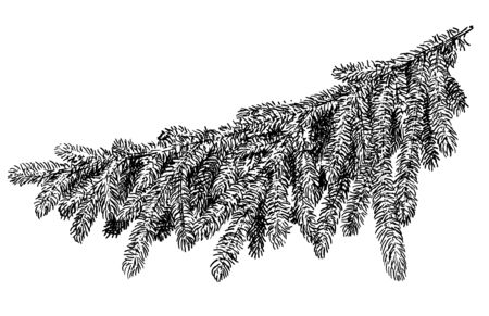 Pine branch illustration, drawing, engraving, ink, line art, vector Ilustracja