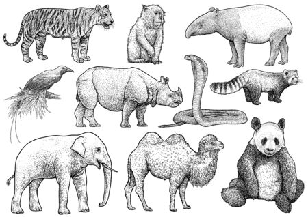 Asian animals collection illustration, engraving, ink, line art, vector Çizim
