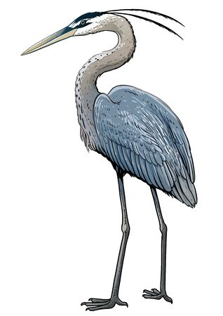 Gray heron illustration, drawing, colorful doodle vector Imagens - 144194529