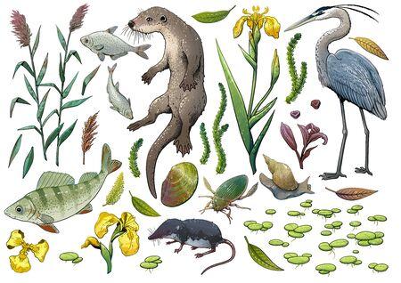 Lake wildlife collection, illustration, drawing, colorful doodle vector Ilustração