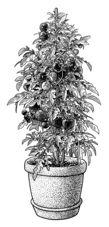 Tomato plant in pot illustration, drawing, engraving, ink, line art, vector Imagens - 149526223