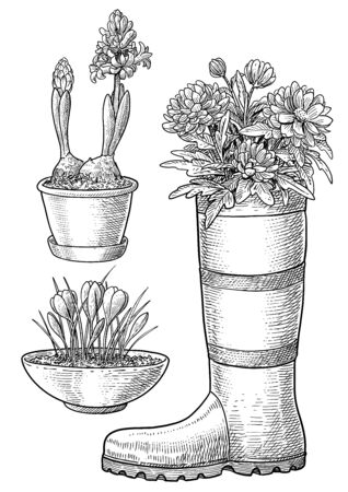 Flowers in pot and boot illustration, drawing, engraving, ink, line art, vector Imagens - 147890297