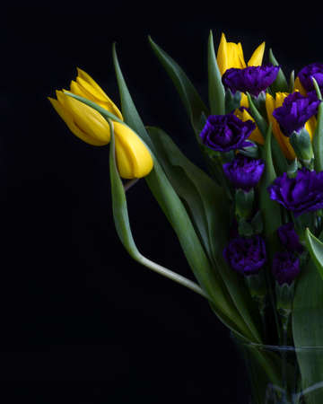 Yellow tulips with purple carnations