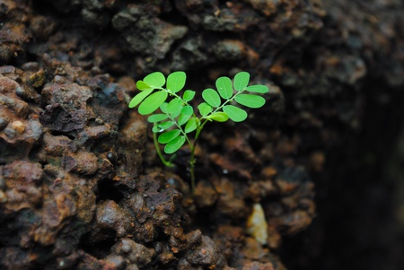 Young green sprout on black ground, focus on leaves Stock Photo - 10438403