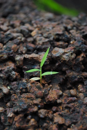 Young green sprout on black ground, focus on leaves Stock Photo