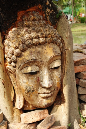 Buddha head wrapped in tree roots photo