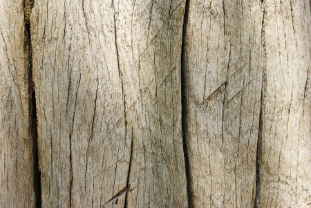 Old Wood Wall Texture Background  photo