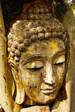 buddha head: Head of wood Buddha in The Tree Roots, Thailand Stock Photo