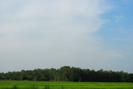 beauty blue sky and green grass photo