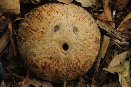Coconut shell smile photo