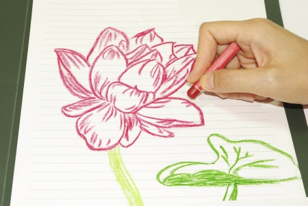 Drawing flowers lotus photo