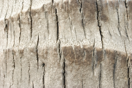 macro coconut tree trunk texture background photo