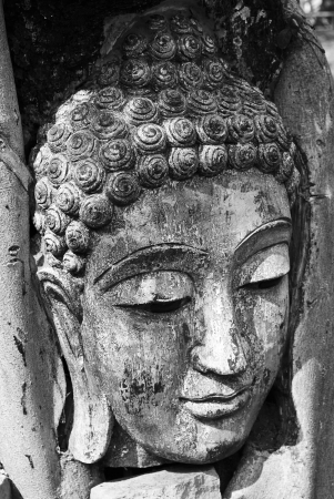 stone buddha: Head of wood Buddha in The Tree Roots, Thailand Stock Photo