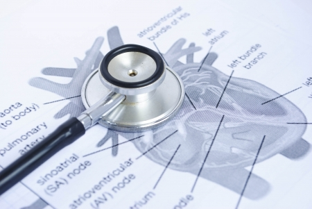 stethoscope on a picture of a human heart photo