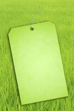 Sale Tag on Green rice fields  photo