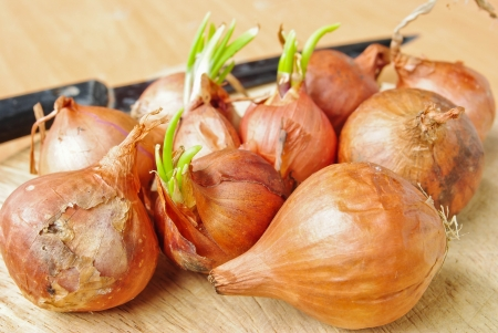Shallot onion photo