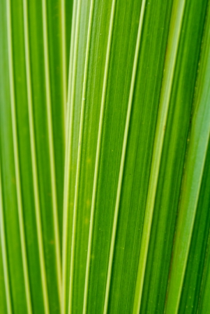 Green leaf background abstract Stock Photo