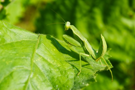 Grasshopper perching on a leaf Stock Photo - 17035167