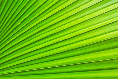 Green leaf background abstract photo