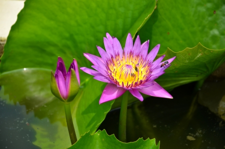 Beautiful water lily on the water's surface photo