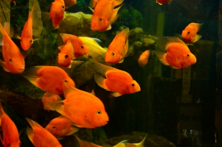 crowded space: gold fish in a bowl