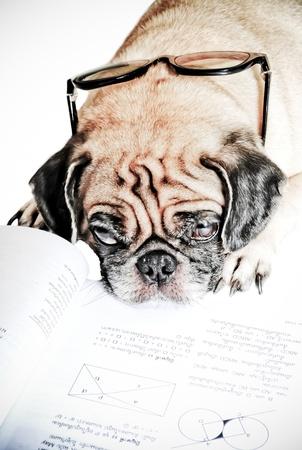 Dog Fell Asleep while doing her homework