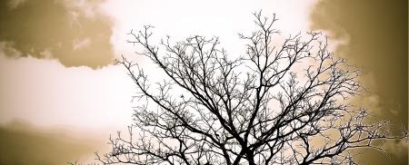tree dead: Albero Morto senza foglie
