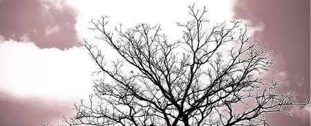 arbre mort: Dead Tree sans feuilles
