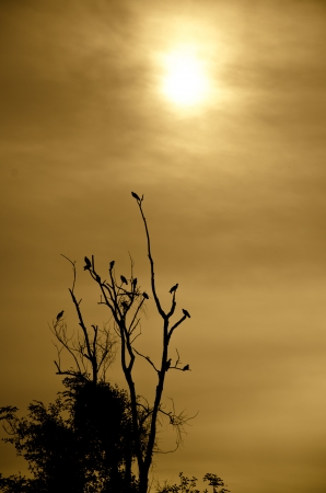 Silhouette of birds in a dead tree photo