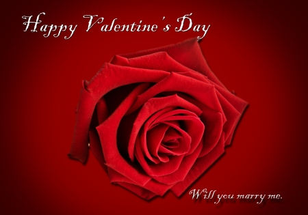 Red roses Valentine background photo