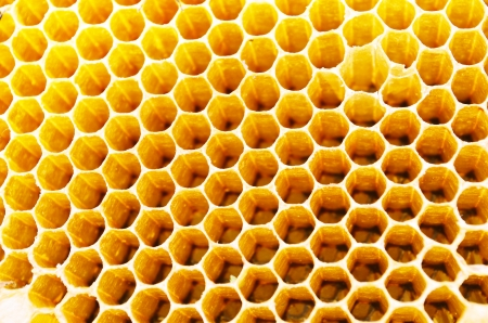 Close up view of the working bees on honey cells photo