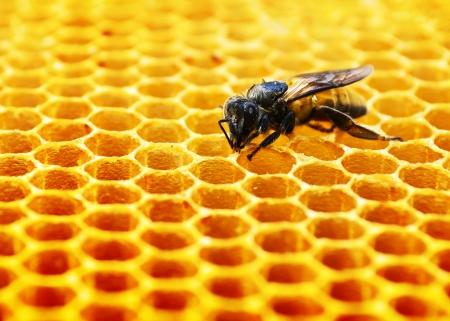 Close-up weergave van de werk bijen op honing cellen Stockfoto
