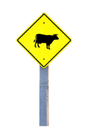 Cow warning sign isolated on white background photo