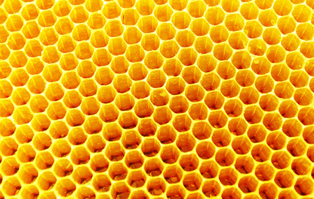 Fresh honey in comb texture photo