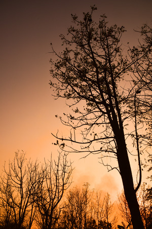 Dead tree in the sunset with a bright orange background photo