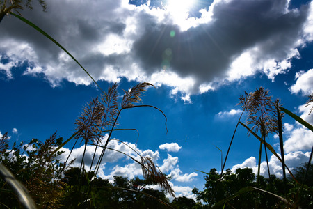 meadow  grass: Hierba de prado en luz posterior de sol
