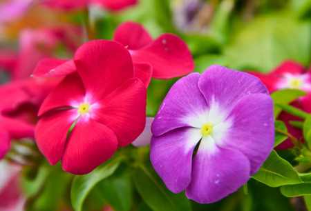 Colorful red flower and violet photo