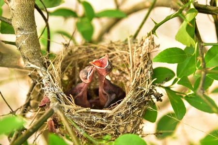 hijos: Nido de pájaros con bebés pequeños.