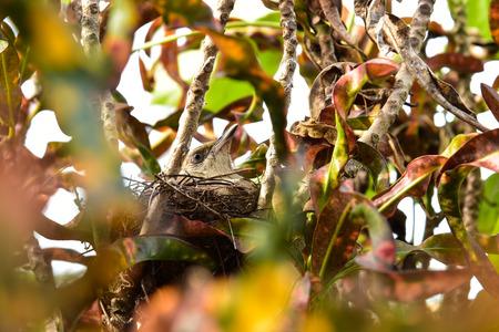 brood: Bird brood in the nest