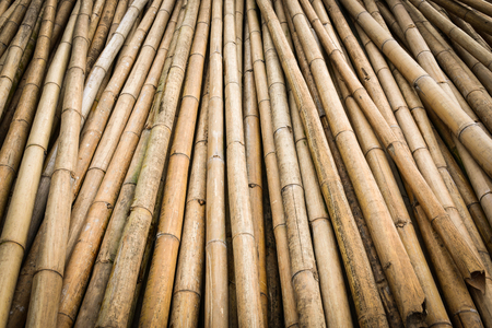 bamboo texture: bamboo texture background Stock Photo