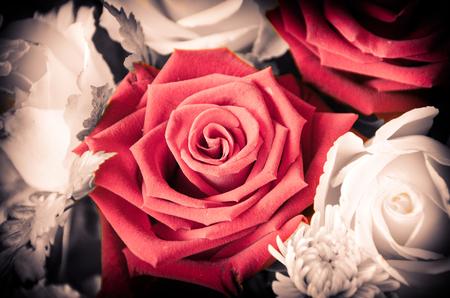 Blue rose flower