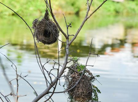 theories: The nature of skylark nests